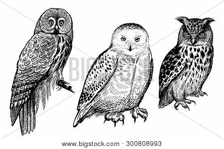 Owls. Realistic Birds Isolated On White Background Set. Vector Illustration. Predatory Forest Birds.
