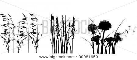 illustration with grass silhouettes isolated on white background