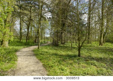 Woodland_Walk