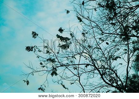 Fallen Leaves Tree Lonliness Feeling With Blue Nature Sky In Autumn Season Change Background