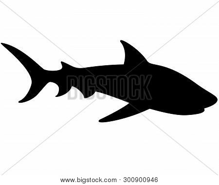 Shark Silhouette - Vector Template For A Logo Or Badge. Outline. Vector Animal - Shark Fish.