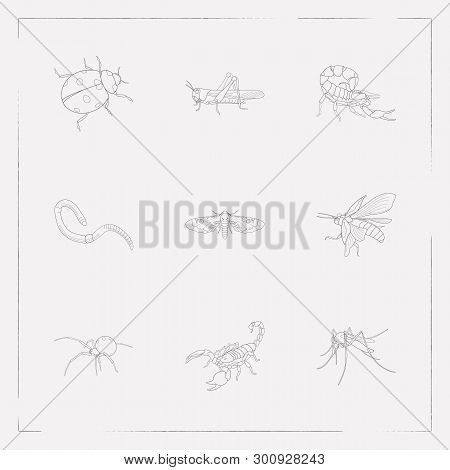 set of bug icons line style symbols with june bug, mosquito, ladybird and  other