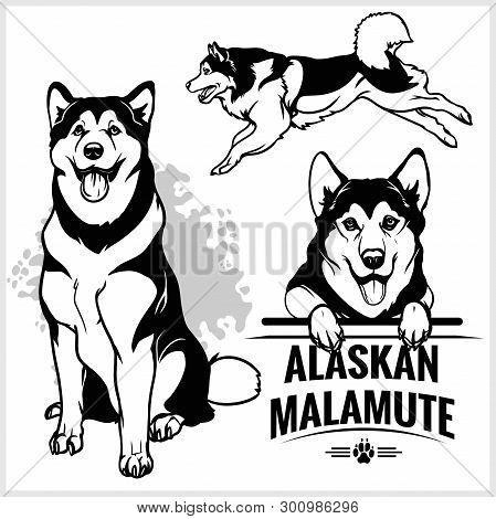 Alaskan Malamute Dog - Vector Set Isolated Illustration On White Background