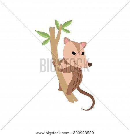 Cute Opossum Wild Animal On Tree Branch Vector Illustration