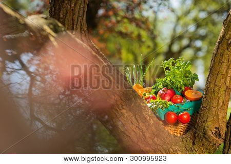 Fresh Organic Vegetables In Wicker Basket In The Garden On A Tree.