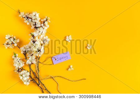Spring White Apricot Blooming Branches Over Yellow Background. Womens Day Easter Spring Holiday Gree
