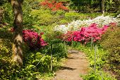 A park in the north eastern Friuli Venezia Giulia region of Italy in spring with lots of azaleas in flower poster