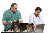Vets examining a Border Collie with a digital otoscope in front of white background poster
