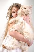 close-up portrait of a little girl holding her Persian breed kitten poster