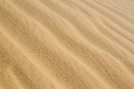 Sahara Sand  Background. Close Up. Amazing Wave Pattern Send Dune Near El Oued,  Algeria,  North Afr