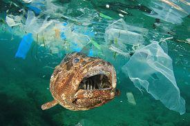 Plastic pollution in ocean and fish. Micro plastics in ocean contaminate seafood