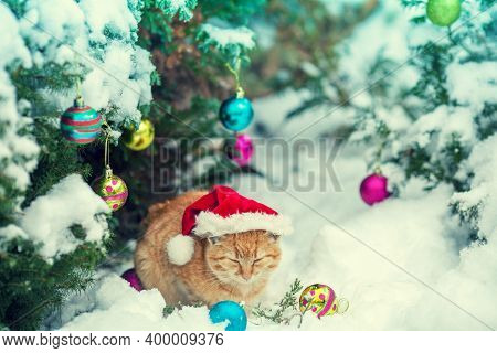 Portrait Of A Ginger Cat Wearing Santa Claus Hat Outdoor In Winter Near Christmas Fir Tree. Christma