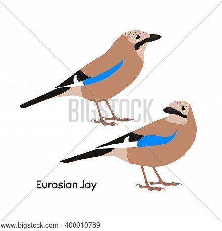 Cute Eurasian Jay Bird. Vector Illustration Eps