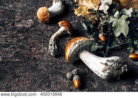 Autumn Composition With Porcini Mushrooms, Acorns And Oak Leaves On Dark Old Wooden Background