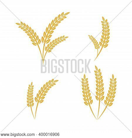 Wheat Ears Spikelets With Grains. Agriculture Wheat Vector Illustration Design Template. Elements Of