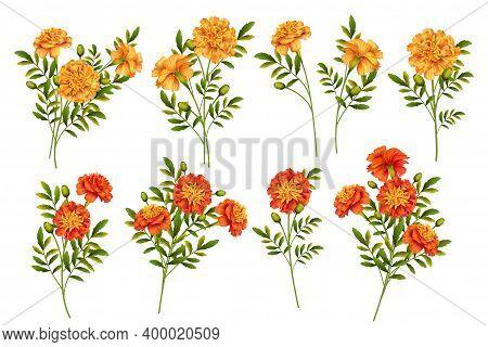 Set Of Marigold Flowers Isolated On White Background