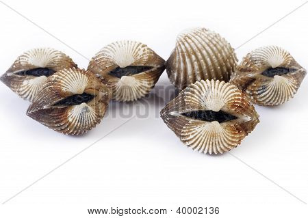 Cockles Isolated On White Background