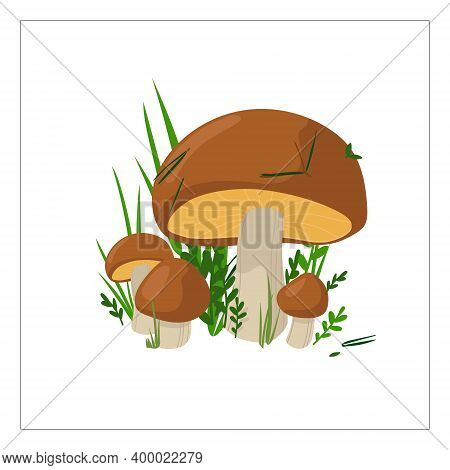 Boletus Mushrooms Of Different Sizes In Composition, Autumn Colors, For Cards Or Invitations, Sticke
