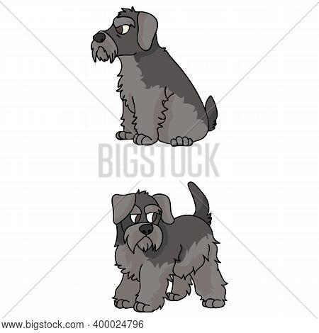 Cute Cartoon Schnauzer Puppy Vector Clipart. Pedigree Kennel Doggie Breed For Kennel Club. Purebred