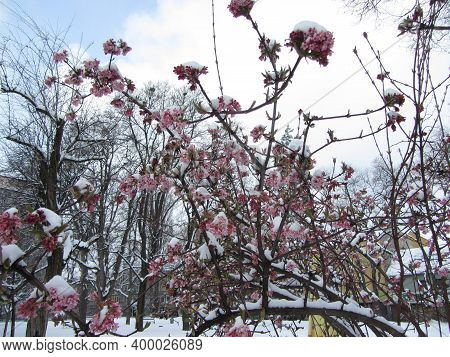 Plants And Onset Of Winter