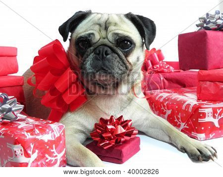 Cute dog with Christmas gifts