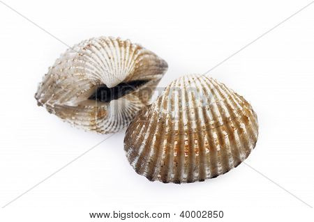 Two Cockles Isolated On White Background