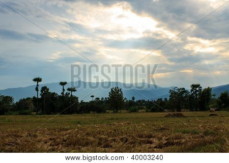Rural Landscape With Wheat Fields And Mountains