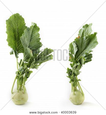 Two Fresh Ripe Organic Kohlrabi Vegetable On White Background Also Scientifically Known As Brassica