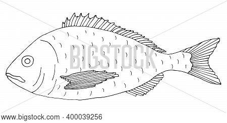 Fish Dorado Hand Drawn. Black And White. Beautiful Fish Drawing On White Background. Vector Illustra