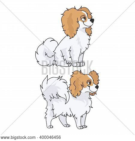 Cute Cartoon Papillon Dog Breed Vector Clipart. Pedigree Kennel Doggie Breed For Dog Lovers. Purebre
