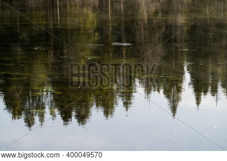 Abstract View Of Pine Tree Reflections In The Yellowstone River In Yellowstone National Park, Useful
