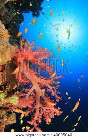 Coral Reef and Fish in Red Sea, Egypt