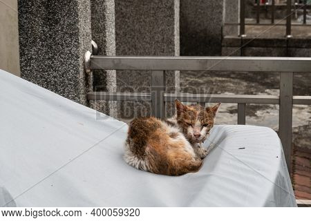 stray cat was sick and drooling at the street