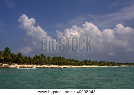 Ocean Coastline  Palm And Tree In Dominicana