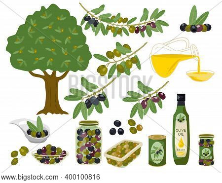 Olive Products Collection. Olive Oil, Branches, Bottles Illustration. Olive Oil Capacity Bottle And
