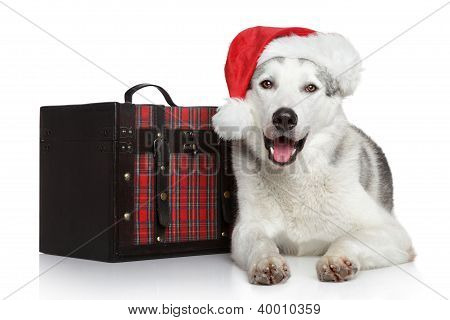 Happy Husky Dog In Red Santa Hat