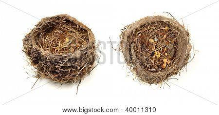 Birds nest two views