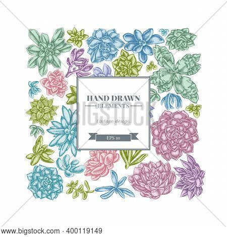 Square Floral Design With Pastel Succulent Echeveria, Succulent Echeveria, Succulent Stock Illustrat