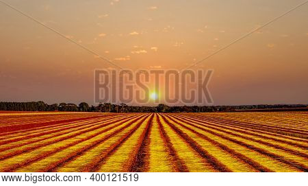 Flax Fields During The Harvest Of August Near The City Of Etretat,  In Normandy, France