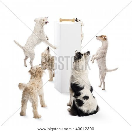 Dogs sitting, jumping, looking at a bone on a pedestal against white background