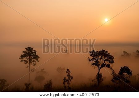 Sunrise Over The Misty Forest.