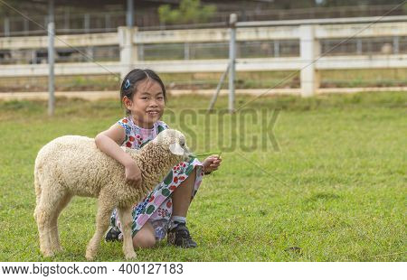 Asian Child Girl Feeding A Baby Lamb In Farm, Hand Holding Grass For Baby Lamb To Eat, Eyes Looking