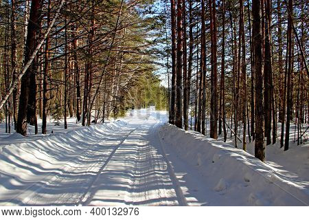 Winter Forest. Tree Branches Have No Snows On The Trees, So It Seems That The Forest Is Very Rare. S
