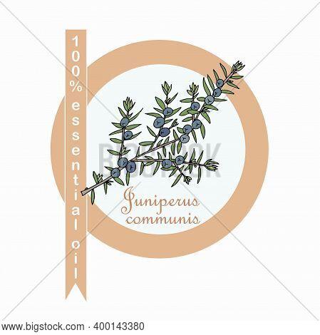 Common Juniper 100% Essential Oil Label. Colorful Art Design Elements Stock Vector Illustration For