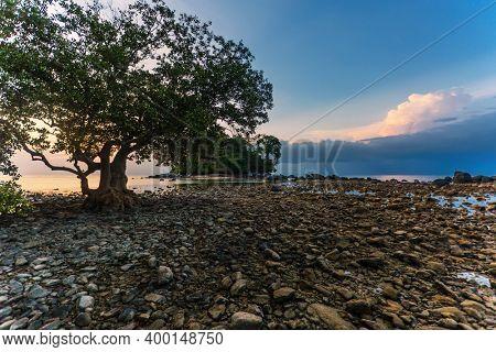 Beautiful sunset landscape with tree silhouettes on low tide beach. Nai Yang beach. Phuket. Thailand