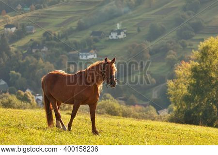 Red Horses In The Mountains, In The Carpathians, Ukraine
