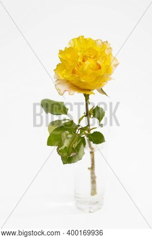 The One Orange Rose Candlelight On White Background. Copy Space. Copy Space