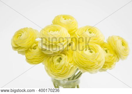 Bouquet Of Yellow Ranunculus In A Glass Vase On A Pale Gray Background. Copy Space