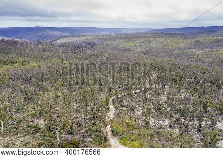 Aerial Photograph Of A Dirt Track And Forest Regeneration After Bushfires Near Clarence In The Centr