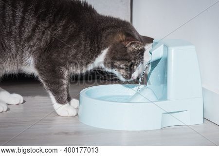 Cat With Water Dispenser. Cat Water Fountain. Pet Thirst. Dehydration In A Cat